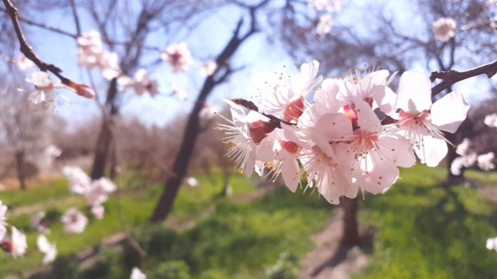 نو بهار مبارک - نیتا متال